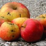 Fruta Feia – redução do descarte de frutas e legumes de qualidade(ícone)