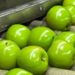 Indústria Verde – produção e consumo sustentável no setor de alimentos e bebidas (ícone)